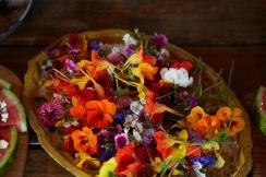Veld and Sea Flower Workshop - edibe flowers