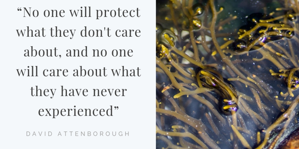 """No one will protect what they don't care about; and no one will care about what they have never experienced""― David Attenborough"