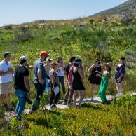 Fynbos Guided Walk